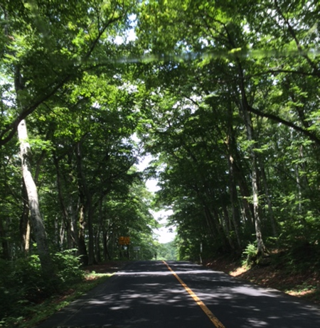 大山寺への道